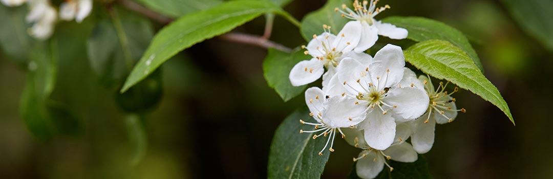 Photo of flower on tree